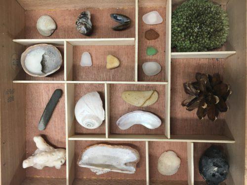 curiosity cabinet by Kiah Gardner
