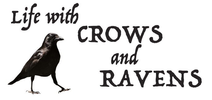 Life with Crows and Ravens